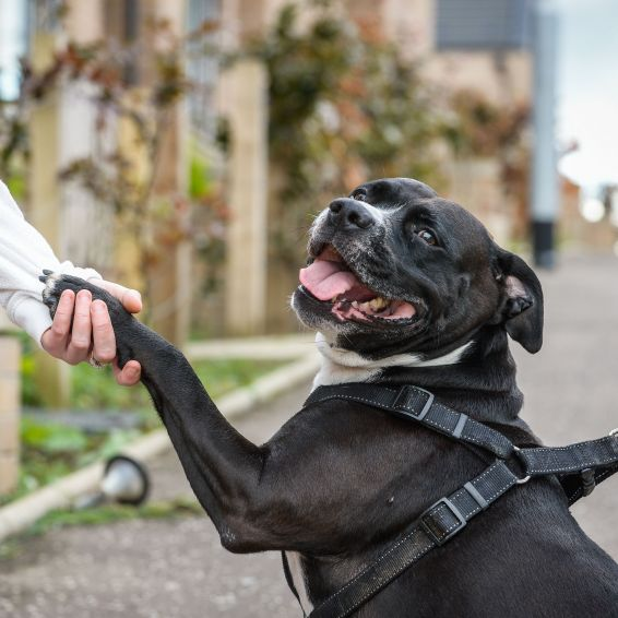 Follow our advice to be a responsible pet owner